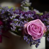 rose-1405552_1920.th.jpg