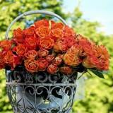 roses-1417473_1920.th.jpg