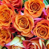 roses-1429633_1920.th.jpg