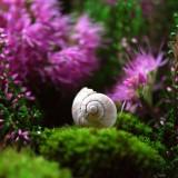 snail-582201_1920.th.jpg