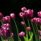 spring-108810_1920.th.jpg