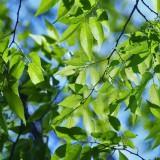 spring-1338814_1920.th.jpg