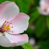 spring-1360468_1920.th.jpg