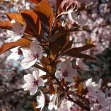 spring-196366_1920.th.jpg
