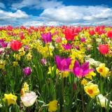 spring-awakening-1197602_1920.th.jpg