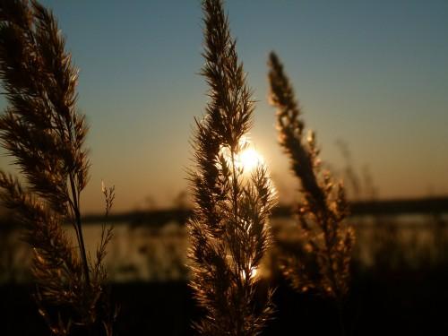 sunset-193304_1920.md.jpg