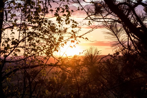 sunset-beyond-the-trees-at-levis-mound-wisconsin.md.jpg