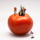tomato-546989_1920.th.jpg