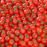 tomatoes-73913_1920.th.jpg