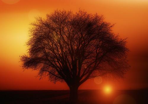 tree-117582_1280.md.jpg