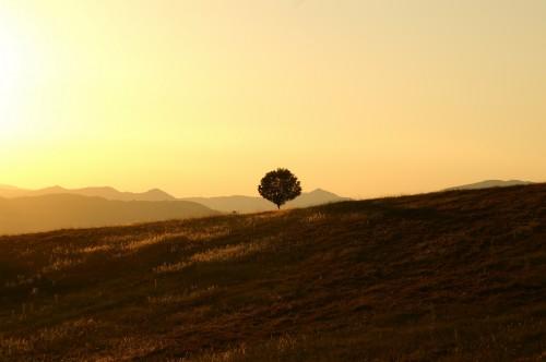 tree-189852_1920.md.jpg