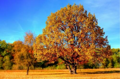 tree-99852_1920.md.jpg