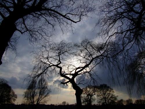 trees-190865_1920.md.jpg