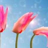 tulip-1320559_1920.th.jpg