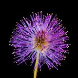 wild-flower-313114_1920.th.jpg