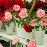 wild-rose-1405442_1920.th.jpg