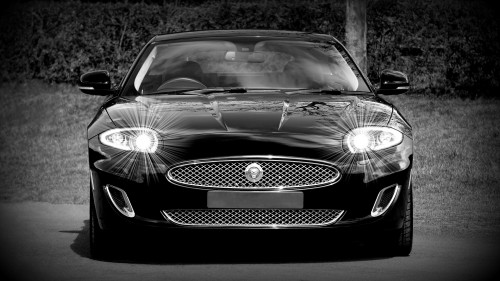 jaguar-1366978_1920.md.jpg