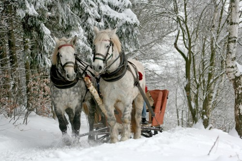 sleigh-ride.md.jpg
