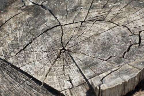 wood-366735_1920.md.jpg