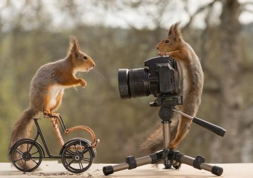 posing-for-the-camera-59216ed535d5d__880.jpg