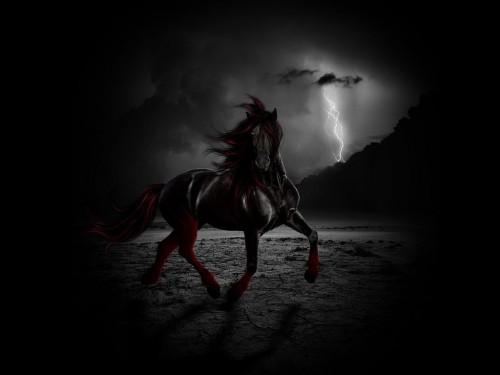ThkkJOK-fantasy-horse-wallpaper.jpg